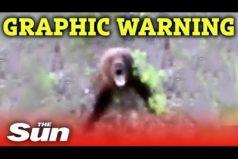 Idiota roku, koleś kopie niedźwiedzia prosto w tyłek