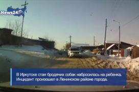 Kierowca taranuje psy, które zaatakowały dziecko