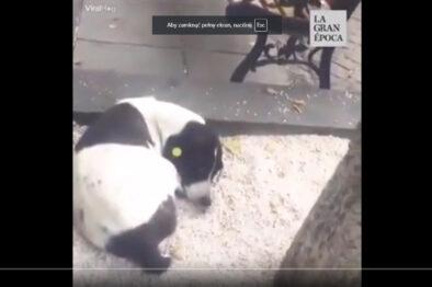 Wzruszająca historia. Właściciel odnajduje psa po 3 latach. Wideo